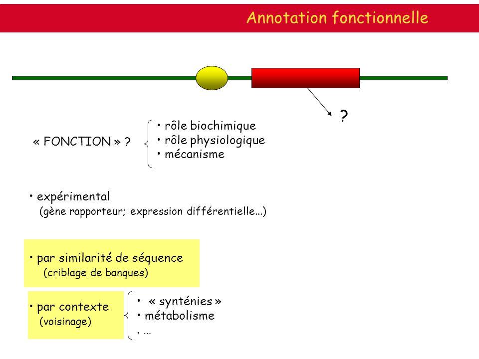 ? « FONCTION » ? rôle biochimique rôle physiologique mécanisme par similarité de séquence (criblage de banques) expérimental (gène rapporteur; express