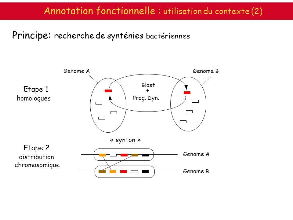 Principe: recherche de synténies bactériennes Etape 1 homologues Genome A Genome B « synton » Genome AGenome B Blast + Prog. Dyn. Etape 2 distribution