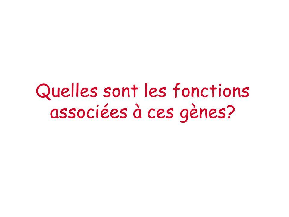 Quelles sont les fonctions associées à ces gènes?