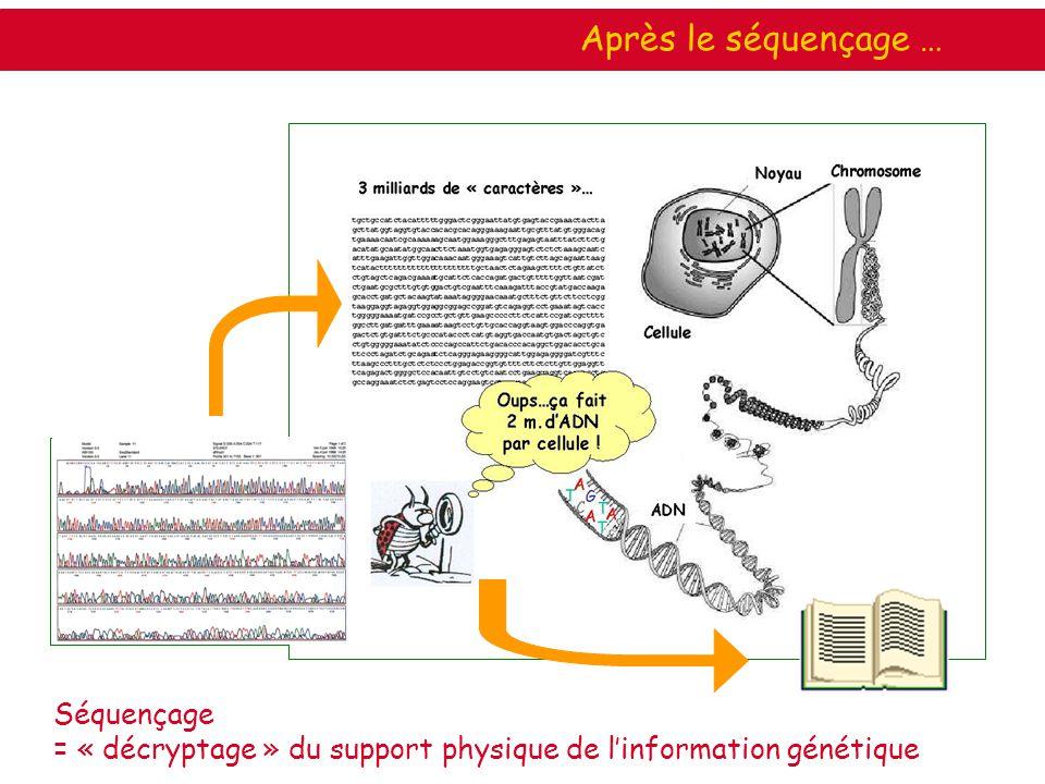 Séquençage = « décryptage » du support physique de linformation génétique Après le séquençage …