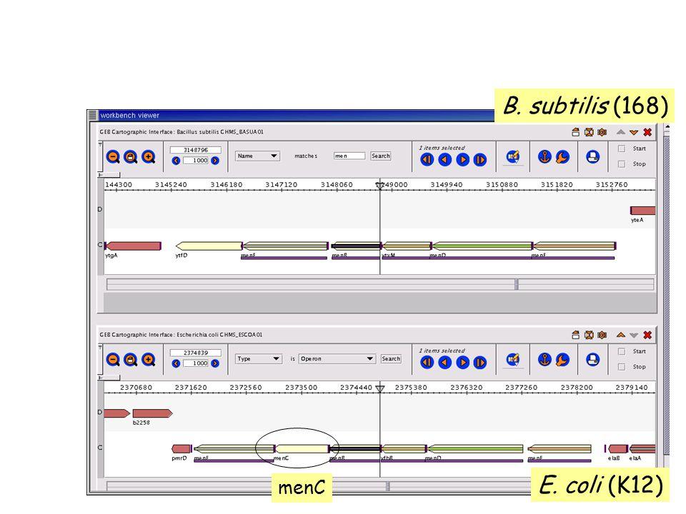 menC B. subtilis (168) E. coli (K12)