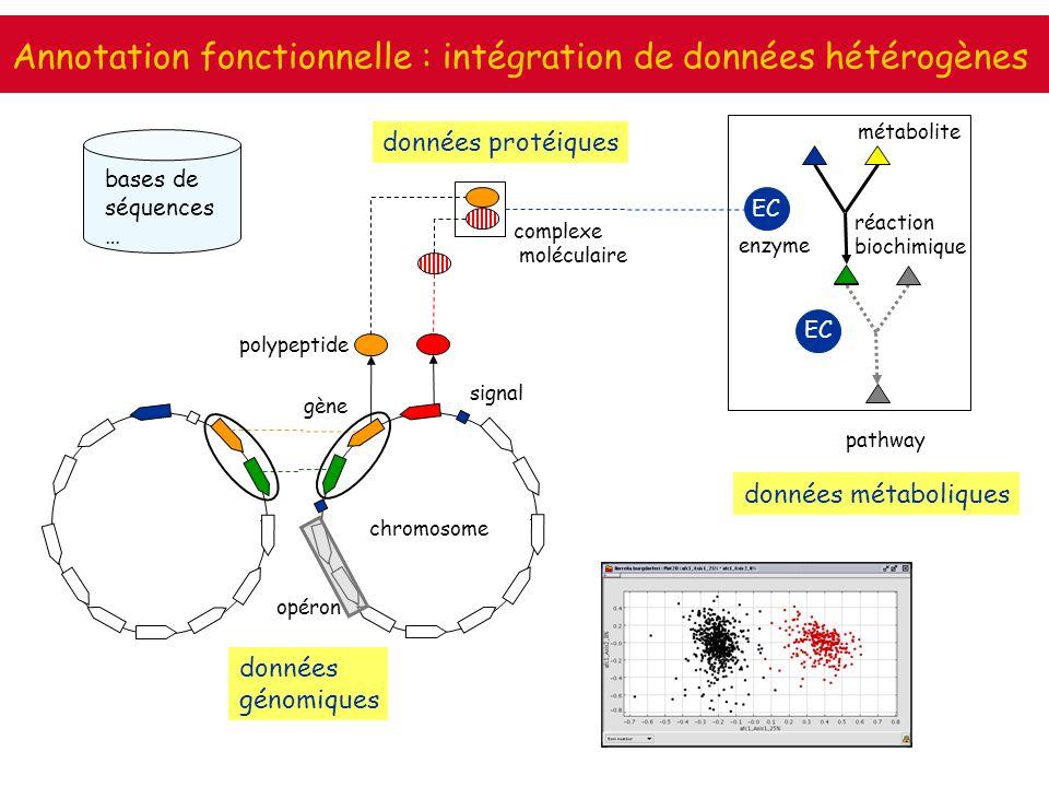 Annotation fonctionnelle : intégration de données hétérogènes EC données métaboliques données protéiques données génomiques chromosome polypeptide pat