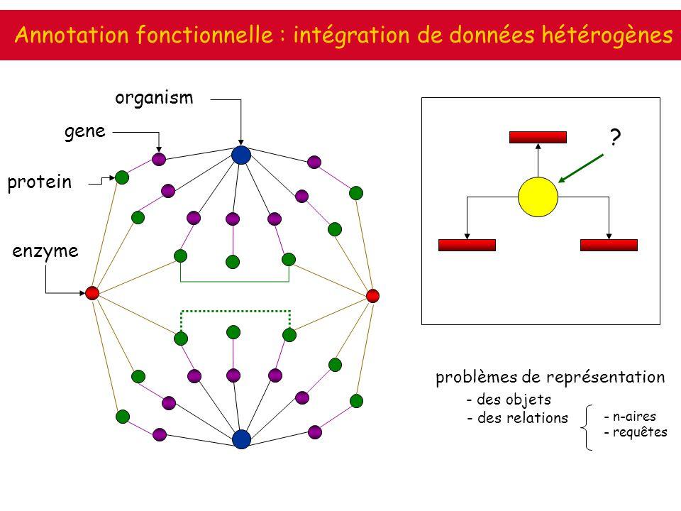 Annotation fonctionnelle : intégration de données hétérogènes organism gene protein enzyme - n-aires - requêtes problèmes de représentation - des obje