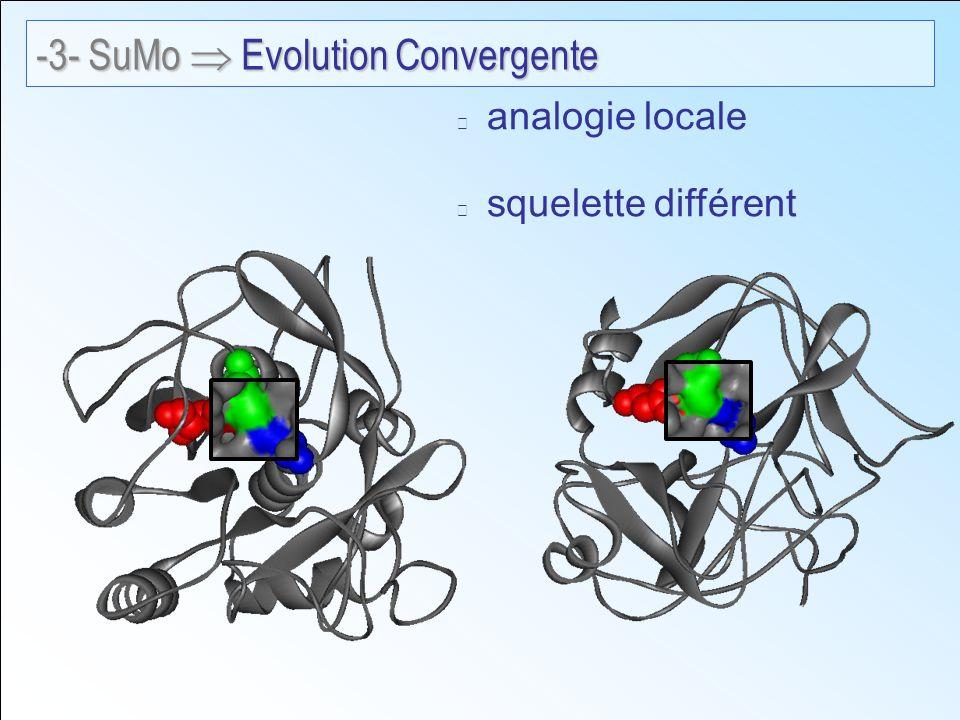 analogie locale squelette différent -3- SuMo Evolution Convergente