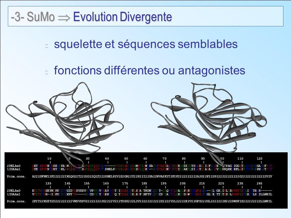 squelette et séquences semblables fonctions différentes ou antagonistes 10 20 30 40 50 60 70 80 90 100 110 120 | | | | | | | | | | | | 2PELAx0 AETVSFNFNSFSEGNPAINFQGDVTVLSNGNIQLTNLN-----KVNSVGRVLYAMPVRIWSSATGNVASFLTSFSFEMKDIKDYDPADGIIFFIAPEDTQIPAGSIGGGTLGVSDTKGAGHFVGV 1IOAAx1 ATETSFNFPNFHTDDKLI-LQGNATISSKGQLQLTGVGSNELPRVDSLGRAFYSDPIQIKD--SNNVASFNTNFTFIIRAKNQSISAYGLAFALVPVNSPPQKKQEFLGIFNTNNPEPNARTVAV *.****.*.: * :**:.*: *:*::***.:.