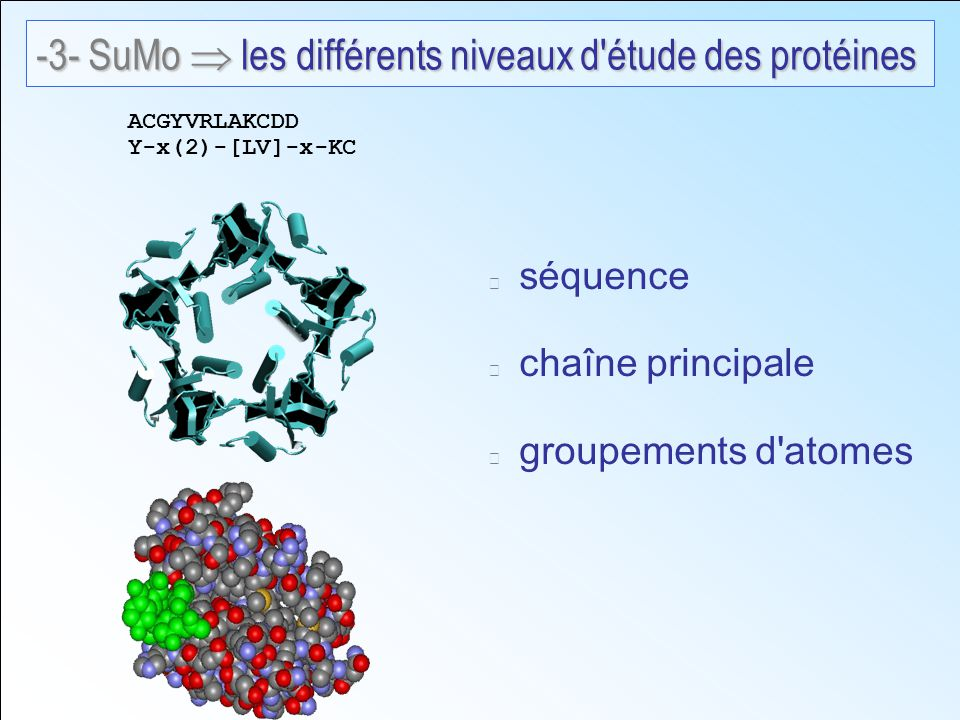 séquence chaîne principale groupements d atomes ACGYVRLAKCDD Y-x(2)-[LV]-x-KC -3- SuMo les différents niveaux d étude des protéines