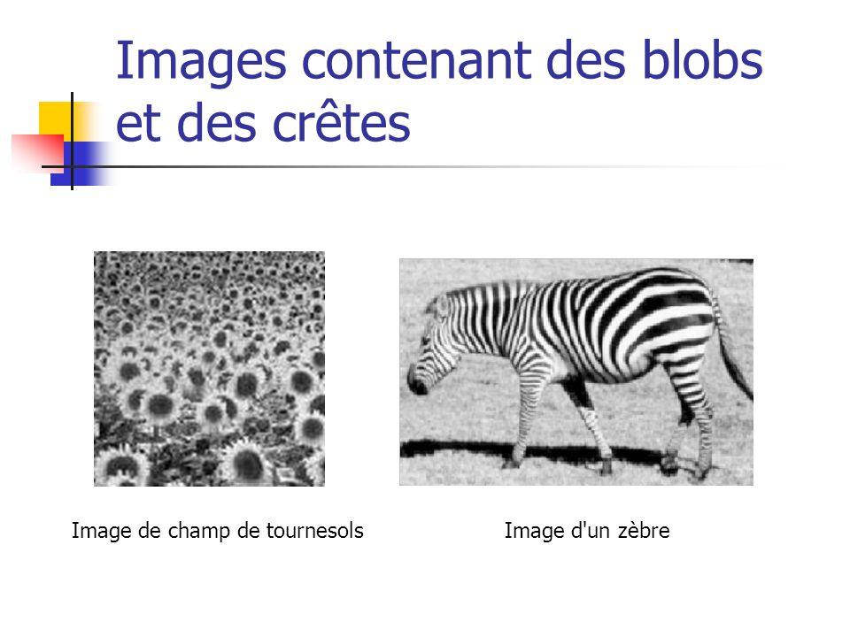 Images contenant des blobs et des crêtes Image de champ de tournesolsImage d'un zèbre