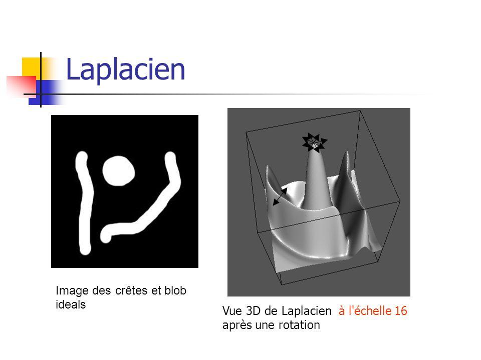 Laplacien Vue 3D de Laplacien à l'échelle 16 après une rotation Image des crêtes et blob ideals