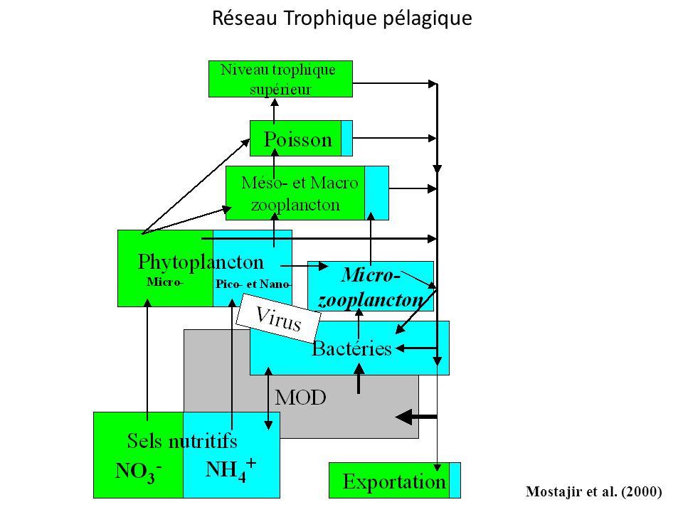 Mostajir et al. (2000) Réseau Trophique pélagique