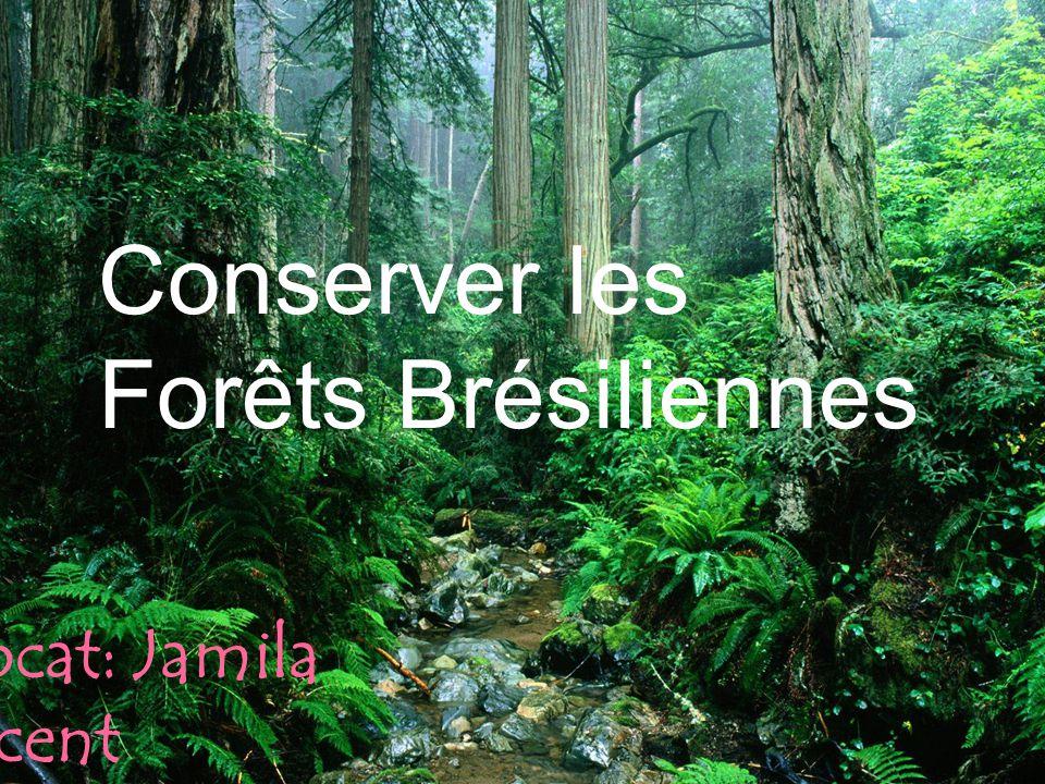 Conserver les Forêts Brésiliennes Avocat: Jamila Vincent
