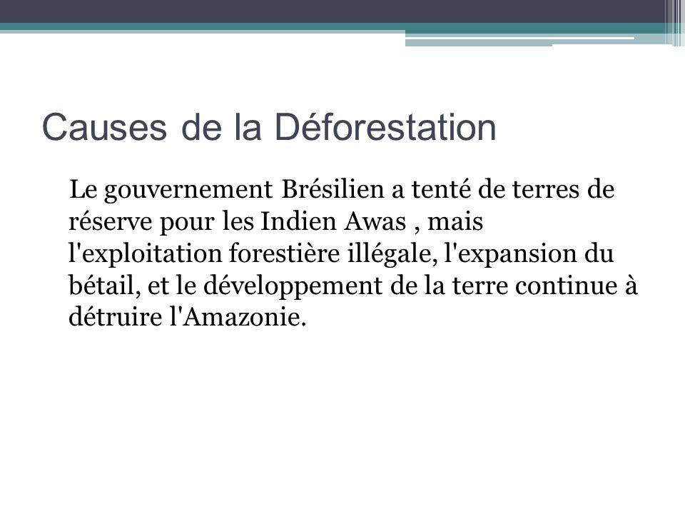 Causes de la Déforestation Le gouvernement Brésilien a tenté de terres de réserve pour les Indien Awas, mais l exploitation forestière illégale, l expansion du bétail, et le développement de la terre continue à détruire l Amazonie.