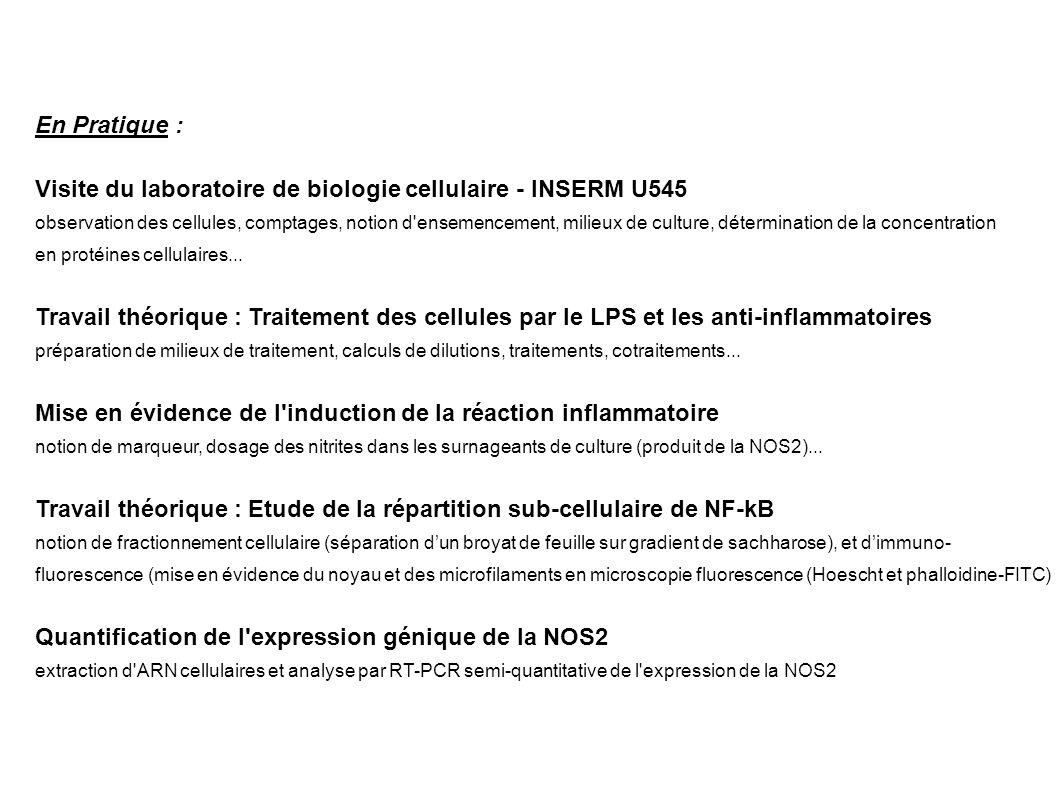 En Pratique : Visite du laboratoire de biologie cellulaire - INSERM U545 observation des cellules, comptages, notion d'ensemencement, milieux de cultu