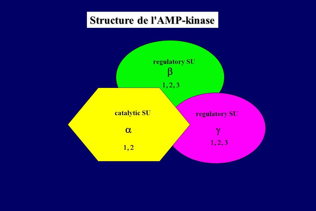 AMPKinase Changements métaboliques Effets enzymatiques Effets géniques Environnement hormonal