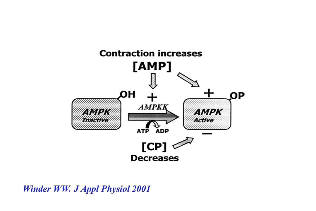 Le traitement de rongeur par AICAR -augmente la captation intramusculaire de glucose même en présence dune insulinorésistance *rongeur sain *rongeur o