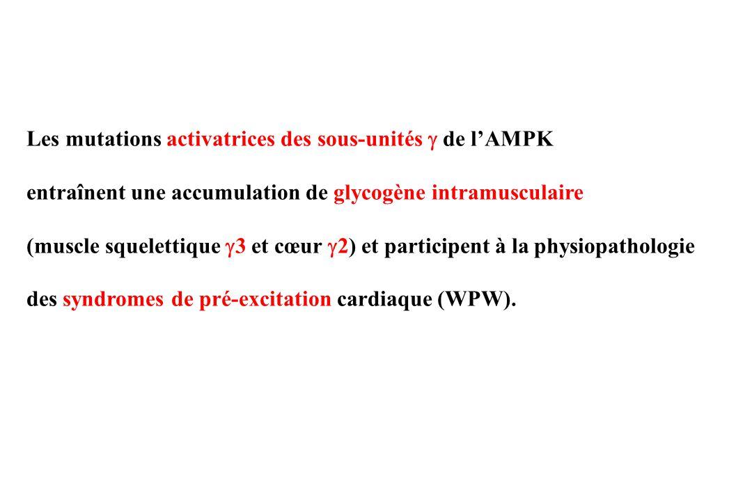 La réduction spécifique de lactivité de lAMPK dans les muscles -sassocie à une diminution de la captation de glucose contraction dépendante -réduit la