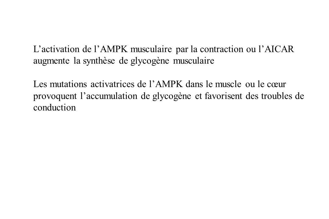 Arad M et al. Circulation 2003
