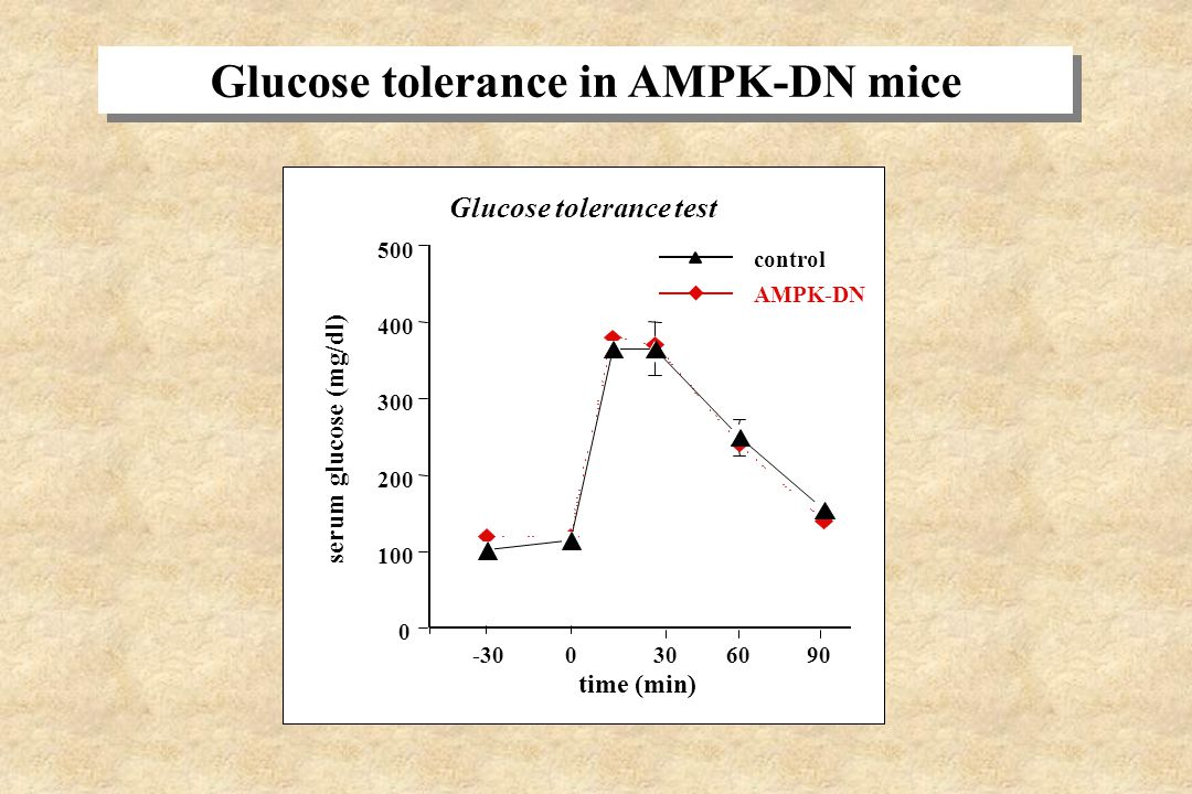 use of AMPK-DN mice expressing a dominant inhibitory mutant of AMPK in skeletal muscle. use of AMPK-DN mice expressing a dominant inhibitory mutant of