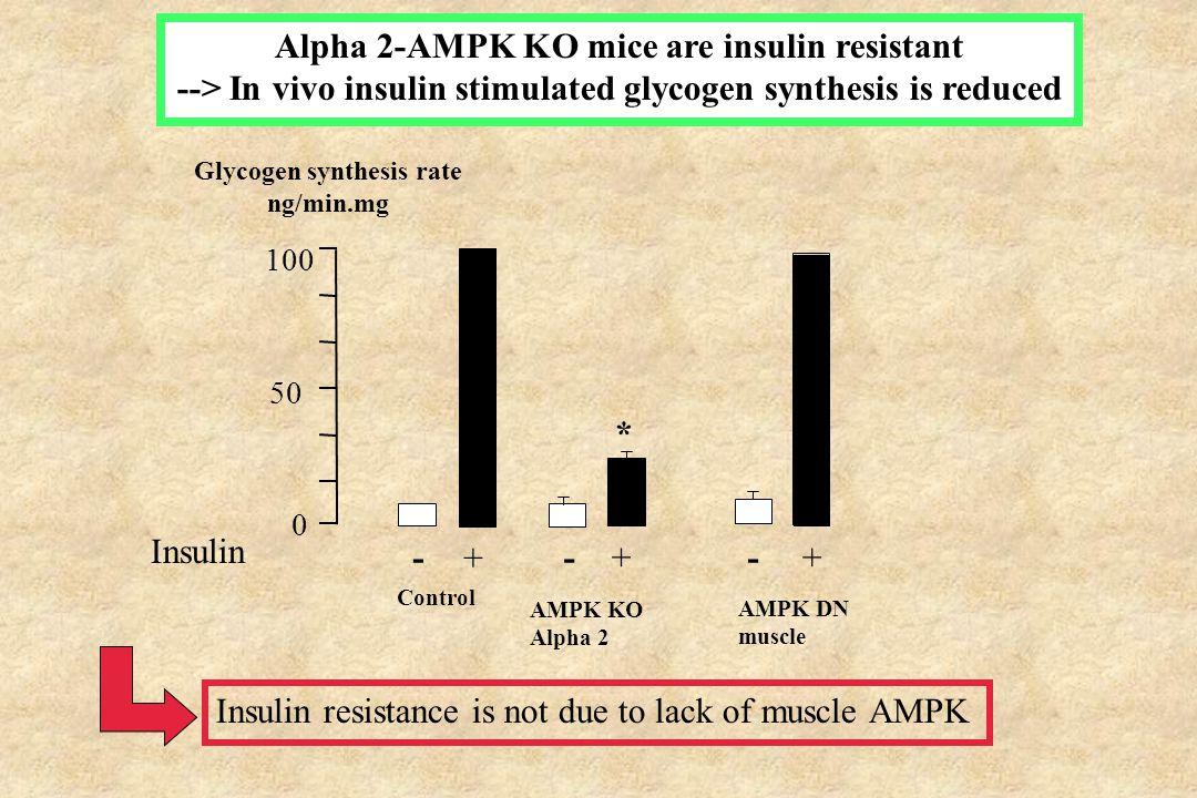 Glucose tolerance test 0 100 200 300 400 500 -3003090 time (min) Glucose tolerance in AMPK-DN mice 60 AMPK-DN serum glucose (mg/dl) control