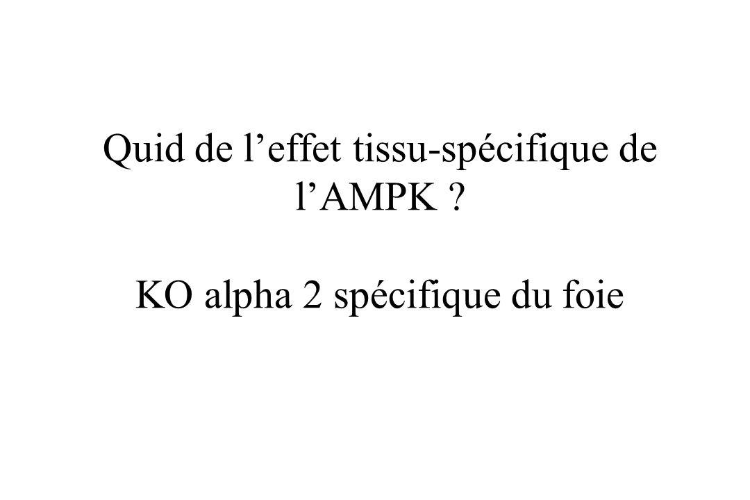 La délétion de la sous-unité alpha 2 de lAMPK dans tous les tissus altère la sensibilité à linsuline et prédispose à lobésité. Intérêt en génétique hu