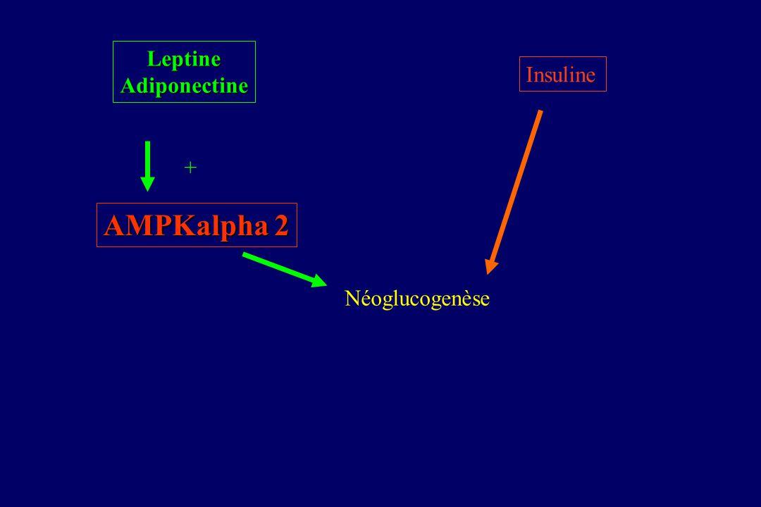 Table adiponectine Andreelli F et al, Endocrinology 2006 Pas de conséquence sur la signalisation de linsuline Perte du contrôle de la PHG par la lepti