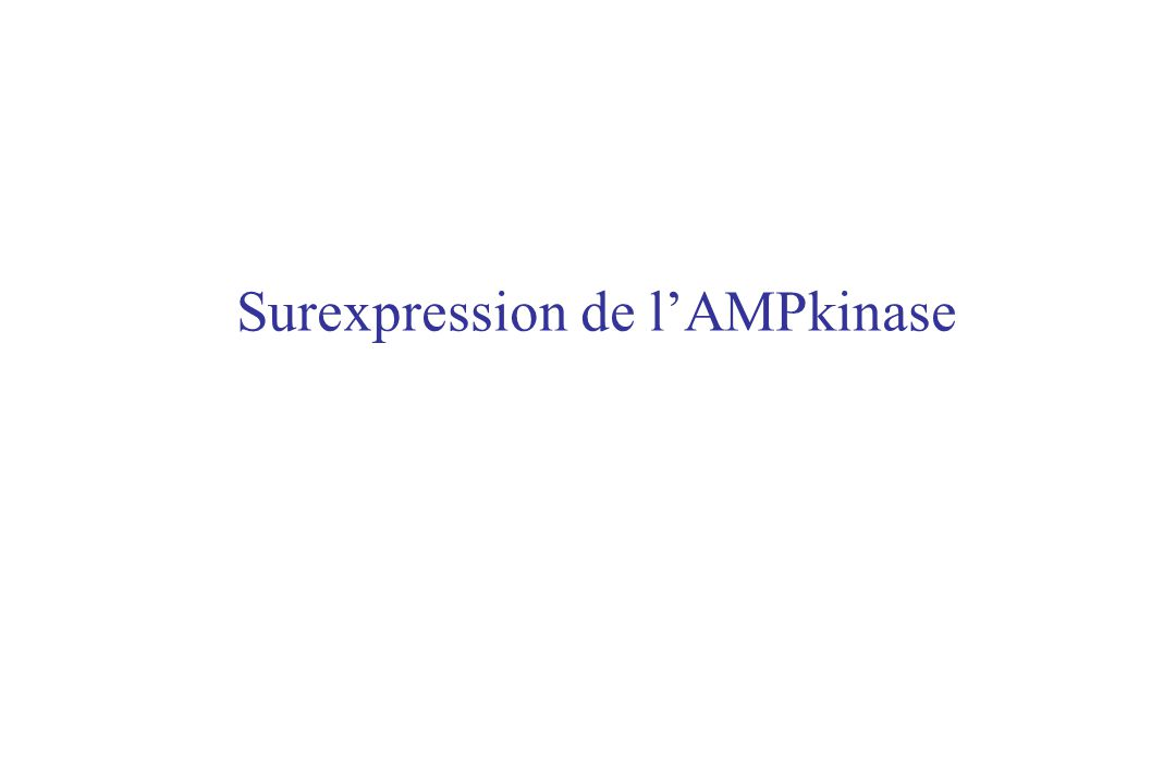 AMPKalpha 2 LeptineAdiponectine + Néoglucogenèse Insuline