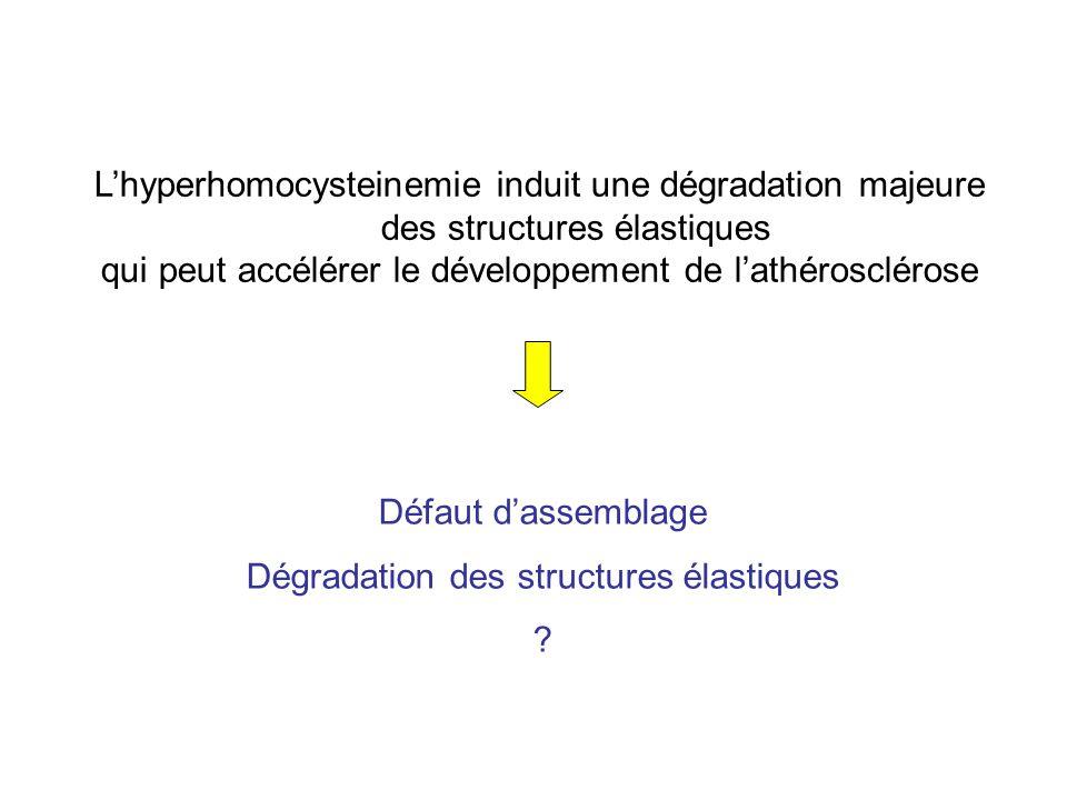 Défaut dassemblage Dégradation des structures élastiques .