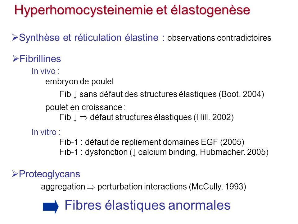 Fibrillines In vivo : embryon de poulet Fib sans défaut des structures élastiques (Boot. 2004) poulet en croissance : Fib défaut structures élastiques