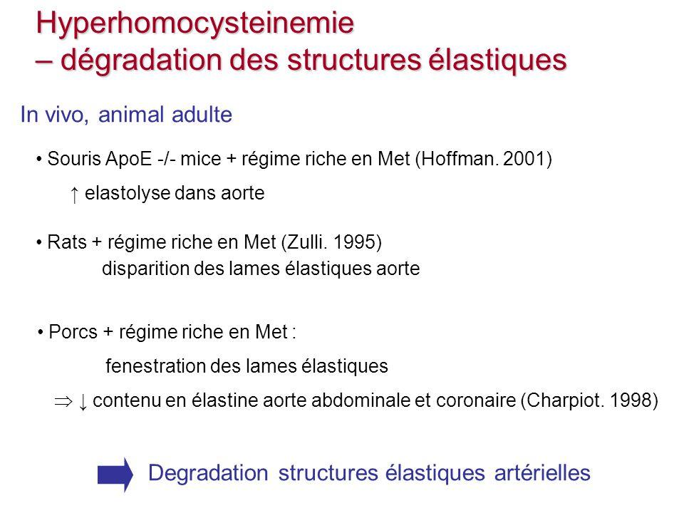 Porcs + régime riche en Met : fenestration des lames élastiques contenu en élastine aorte abdominale et coronaire (Charpiot. 1998) Souris ApoE -/- mic