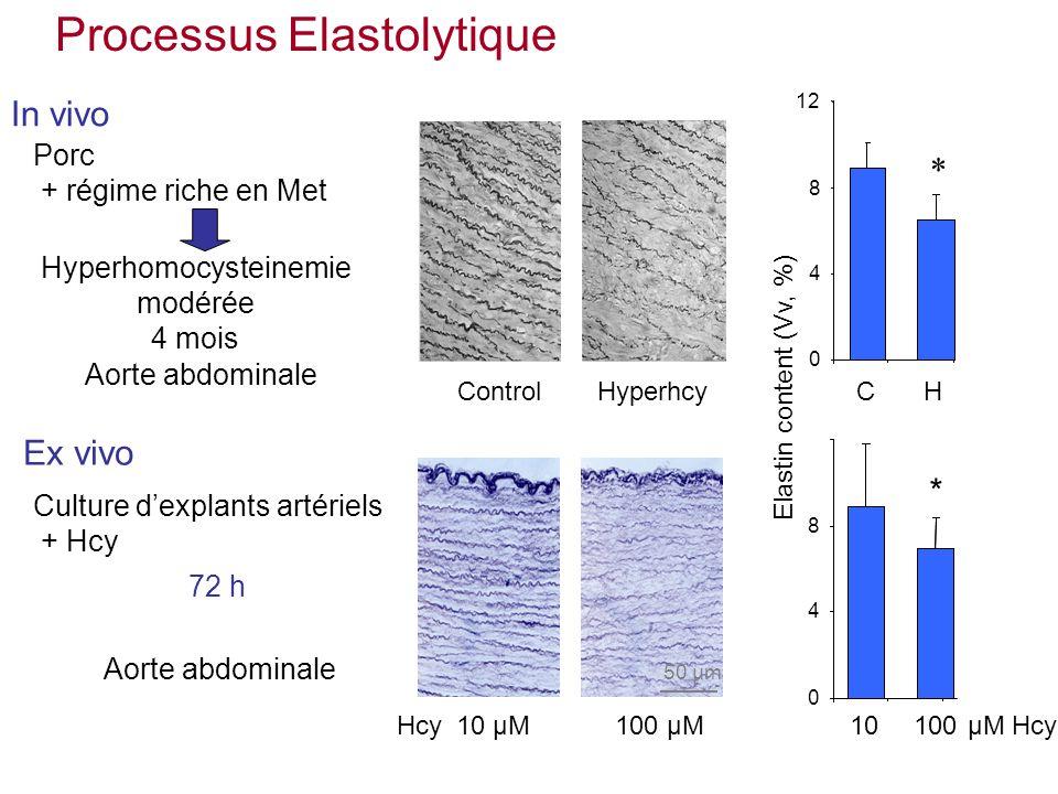 Porc + régime riche en Met Elastin content (Vv, %) 12 ControlHyperhcy 0 4 8 * CH 10 µM100 µMHcy 50 µm 0 4 8 10100µM Hcy * 72 h Hyperhomocysteinemie modérée 4 mois In vivo Ex vivo Culture dexplants artériels + Hcy Aorte abdominale Processus Elastolytique Aorte abdominale