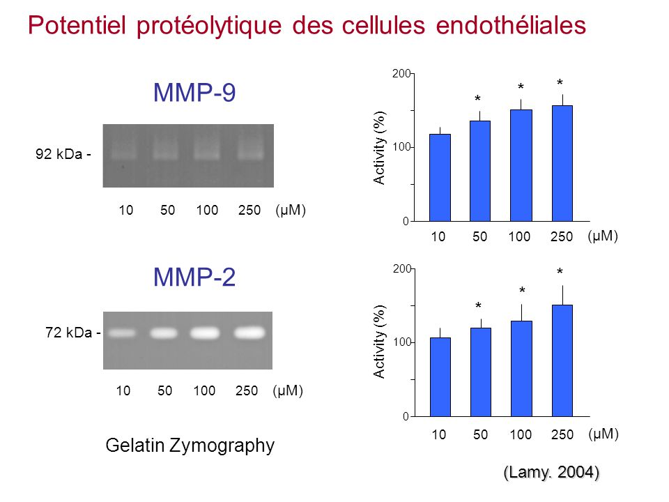 Gelatin Zymography 72 kDa - MMP-2 * * * 100 200 0 * * * 100 200 0 92 kDa - Activity (%) (µM) 1050100250 MMP-9 (Lamy. 2004) Potentiel protéolytique des