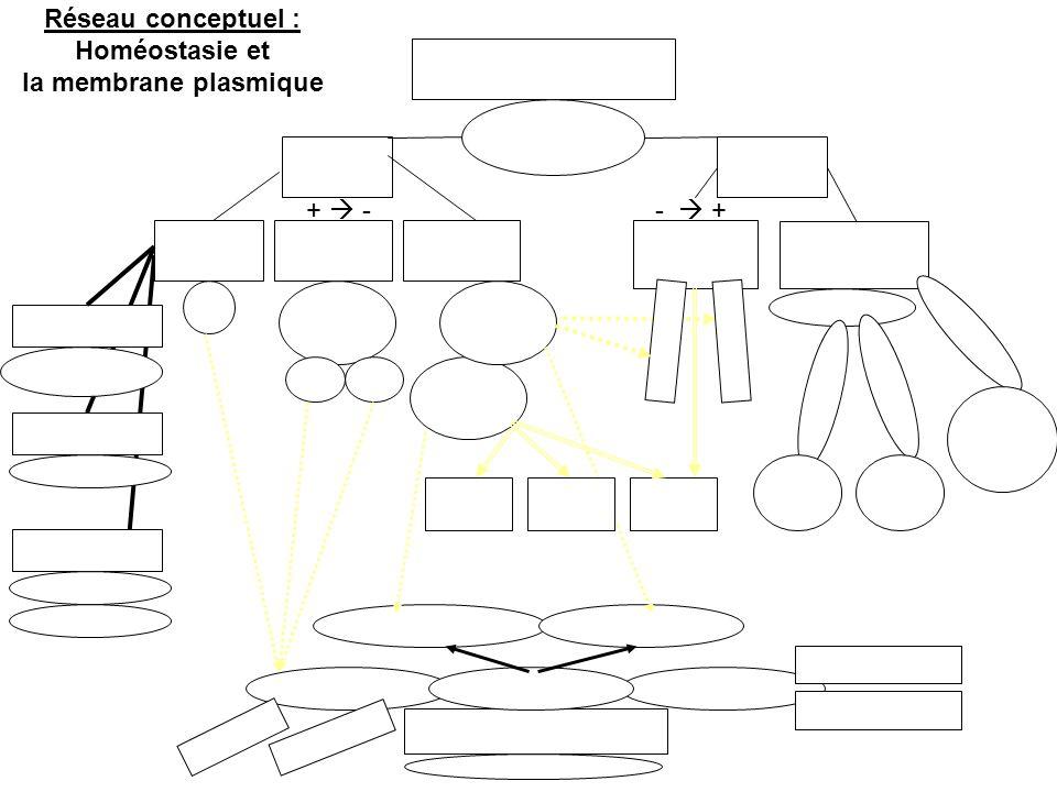 Réseau conceptuel : Homéostasie et la membrane plasmique + -- +