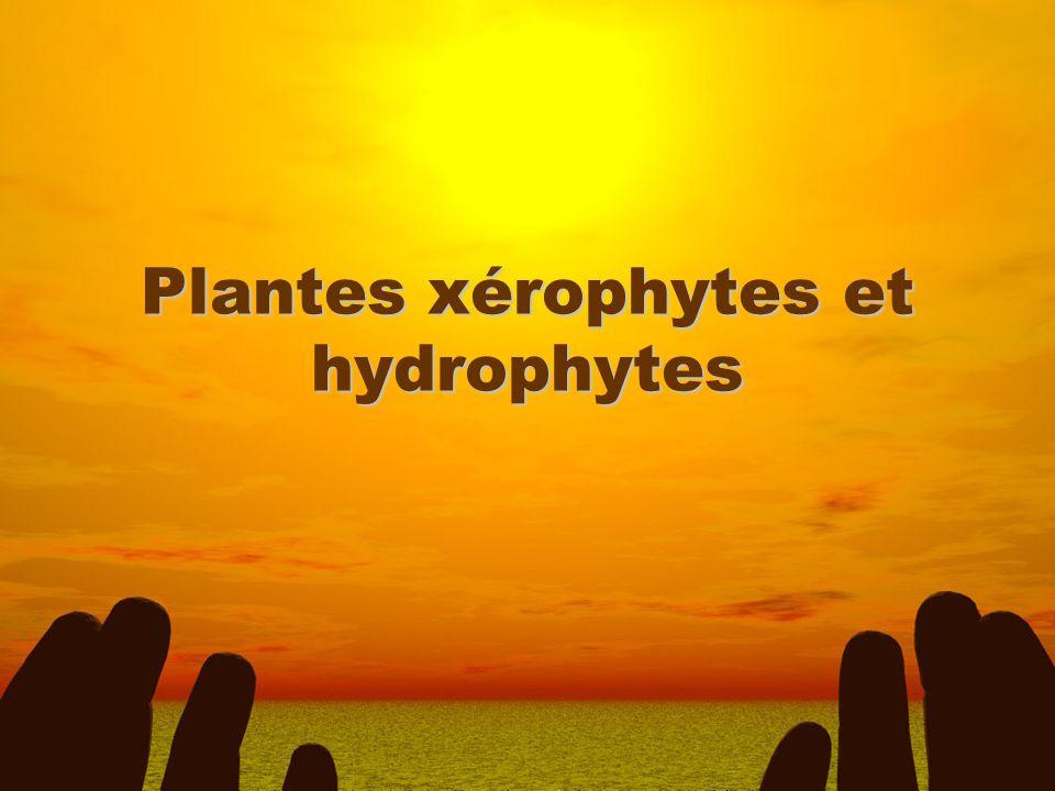 Plantes xérophytes et hydrophytes