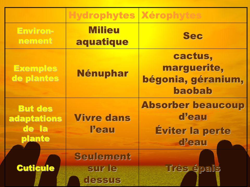 HydrophytesXérophytes Environ- nement Milieu aquatique Milieu aquatiqueSec Exemples de plantes Nénuphar cactus, marguerite, bégonia, géranium, baobab