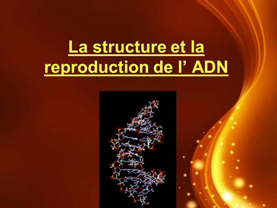 La structure et la reproduction de l ADN