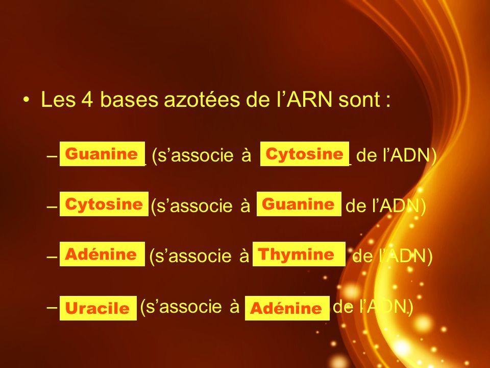 Les 4 bases azotées de lARN sont : –G ______ (sassocie à C_______ de lADN) –C ______ (sassocie à G______ de lADN) –A ______ (sassocie à T_______ de lA