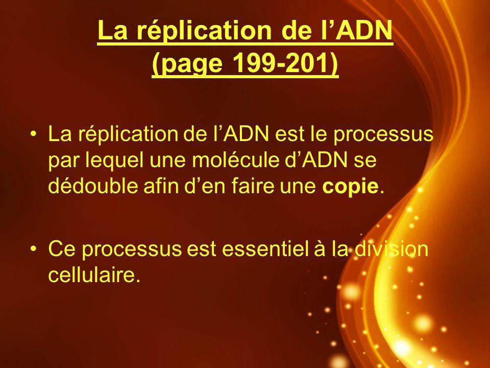 La réplication de lADN (page 199-201) La réplication de lADN est le processus par lequel une molécule dADN se dédouble afin den faire une copie. Ce pr