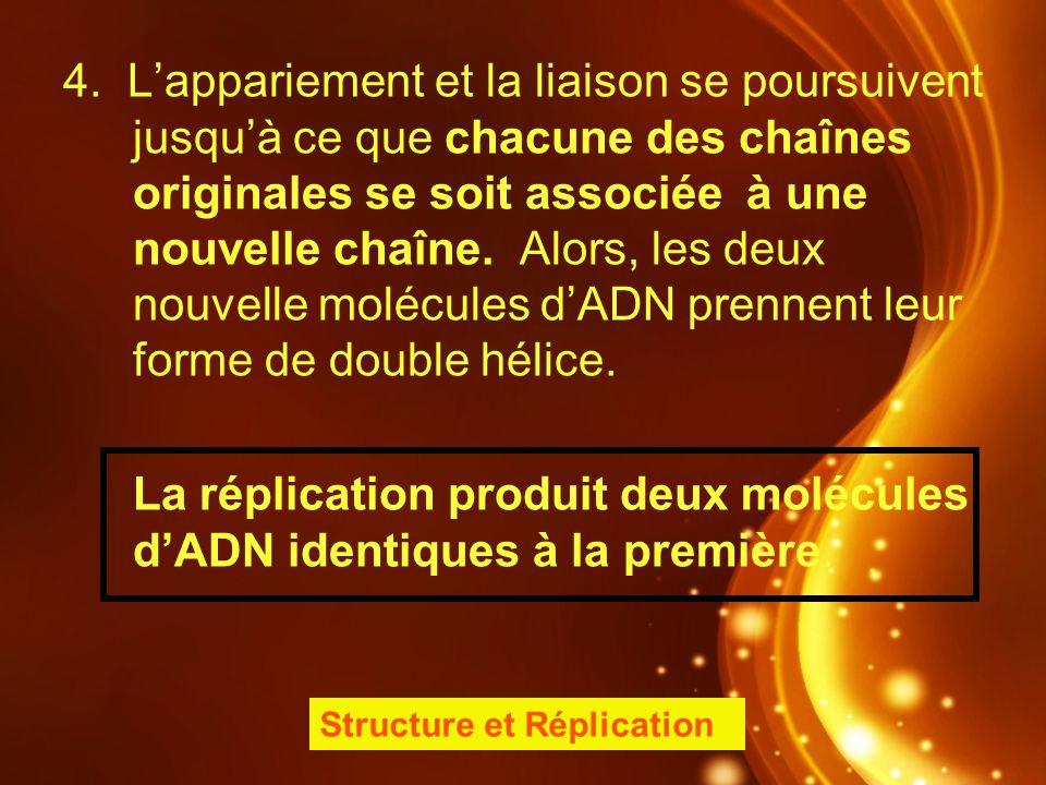 4. Lappariement et la liaison se poursuivent jusquà ce que chacune des chaînes originales se soit associée à une nouvelle chaîne. Alors, les deux nouv