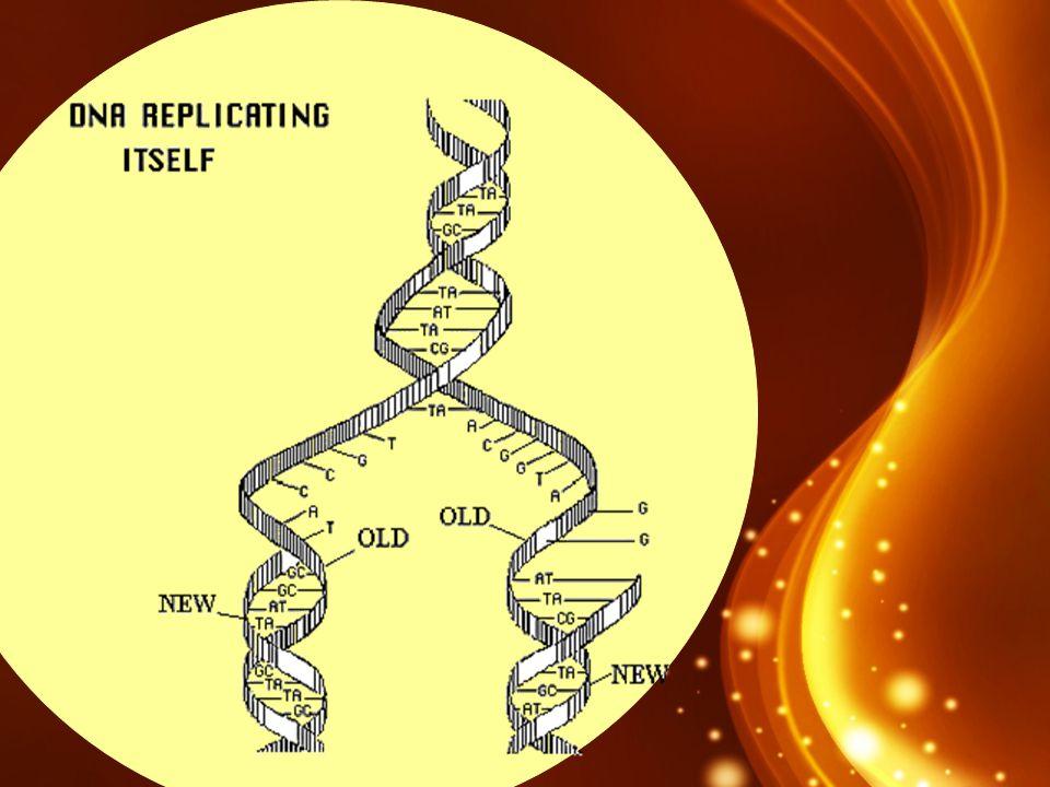 La synthèse des protéines Les protéines fabriquées par les cellules varient selon leur structure et selon leur fonction.