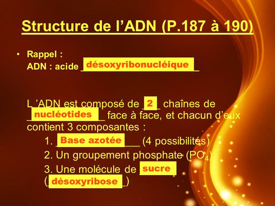 Structure de lADN (P.187 à 190) Rappel : ADN : acide _______________________ L ADN est composé de ___ chaînes de _____________ face à face, et chacun