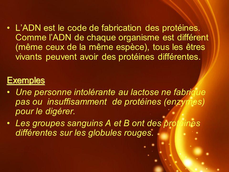 LADN est le code de fabrication des protéines. Comme lADN de chaque organisme est différent (même ceux de la même espèce), tous les êtres vivants peuv