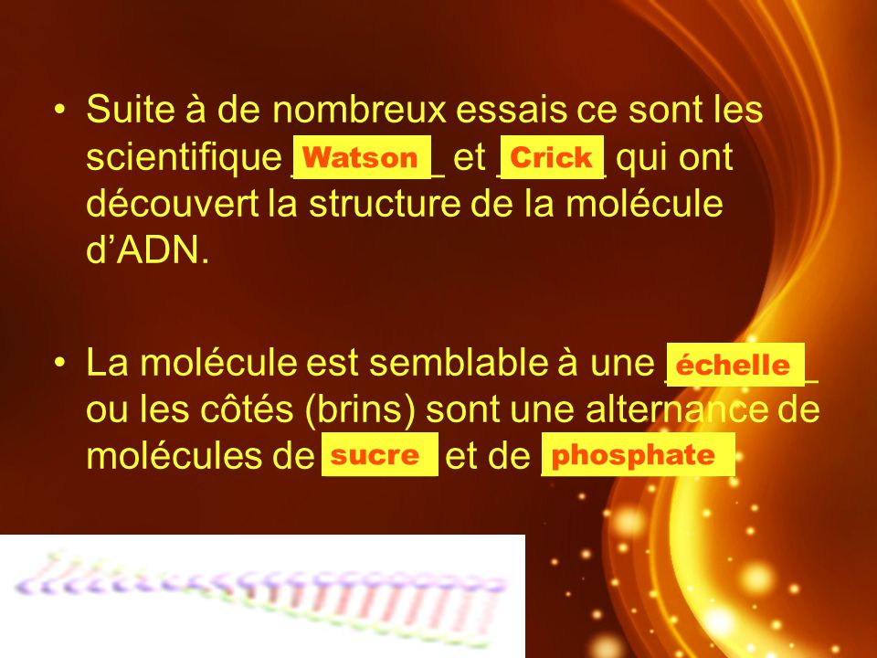 Suite à de nombreux essais ce sont les scientifique _______ et _____ qui ont découvert la structure de la molécule dADN. La molécule est semblable à u