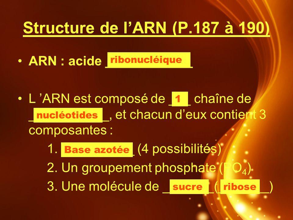 Structure de lARN (P.187 à 190) ARN : acide ____________ L ARN est composé de ___ chaîne de ___________, et chacun deux contient 3 composantes : 1. __
