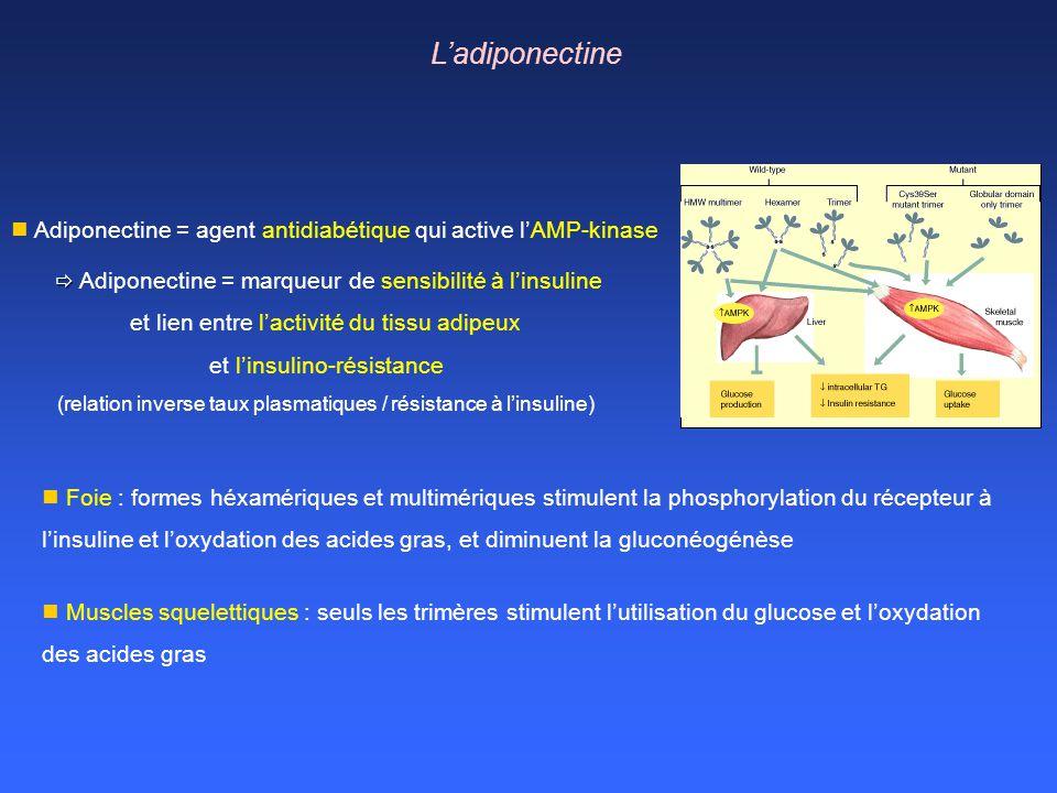 Foie : formes héxamériques et multimériques stimulent la phosphorylation du récepteur à linsuline et loxydation des acides gras, et diminuent la gluco