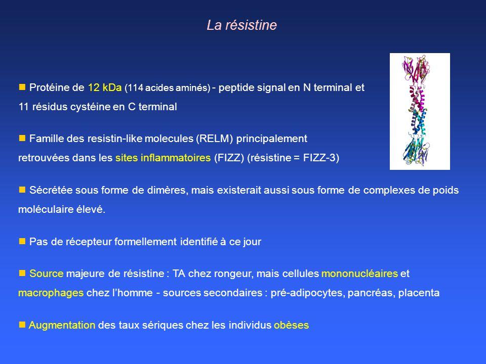 La résistine Protéine de 12 kDa (114 acides aminés) - peptide signal en N terminal et 11 résidus cystéine en C terminal Famille des resistin-like mole