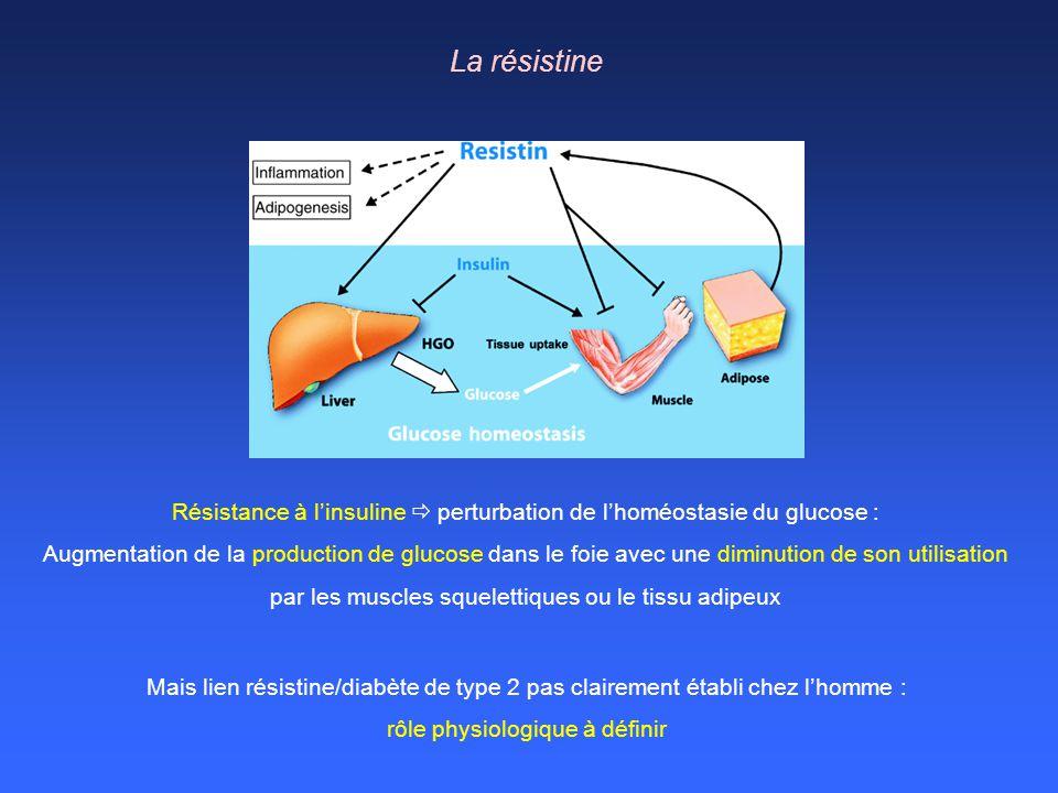 Résistance à linsuline perturbation de lhoméostasie du glucose : Augmentation de la production de glucose dans le foie avec une diminution de son util
