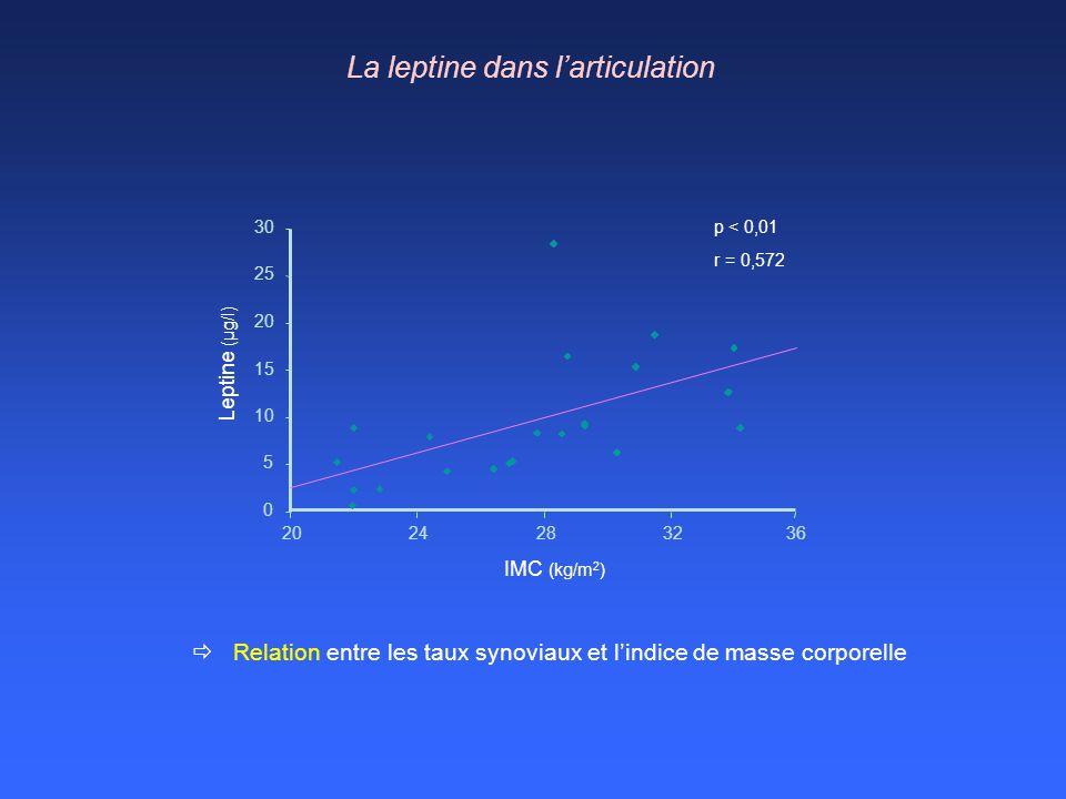 Leptine (μg/l) 15 0 5 10 20 25 30 2024283236 IMC (kg/m 2 ) La leptine dans larticulation Relation entre les taux synoviaux et lindice de masse corpore
