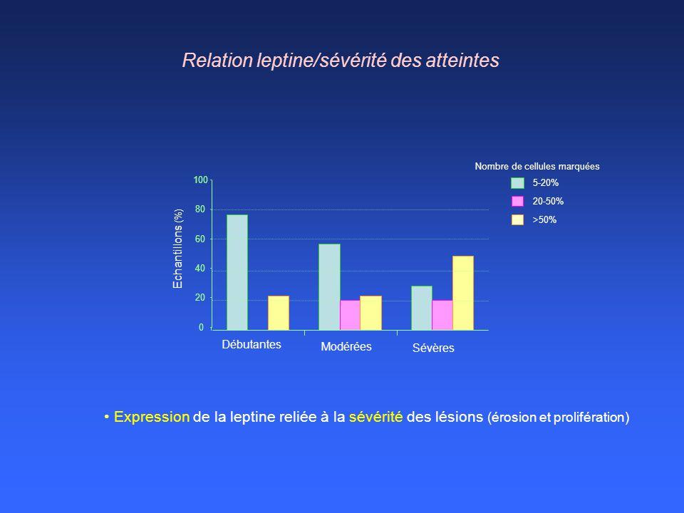 Relation leptine/sévérité des atteintes Expression de la leptine reliée à la sévérité des lésions (érosion et prolifération) Echantillons (%) 0 20 40