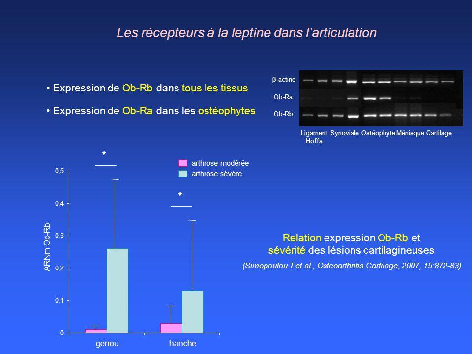 β-actine Ob-Ra Ob-Rb Ligament Hoffa SynovialeOstéophyteMénisqueCartilage Les récepteurs à la leptine dans larticulation Expression de Ob-Rb dans tous
