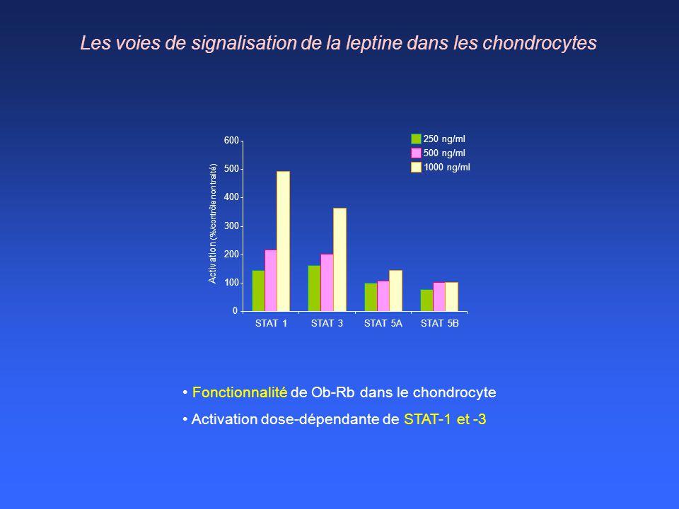 Les voies de signalisation de la leptine dans les chondrocytes 0 100 200 300 400 500 600 STAT 1STAT 3STAT 5ASTAT 5B Activation (%/contrôle non traité)