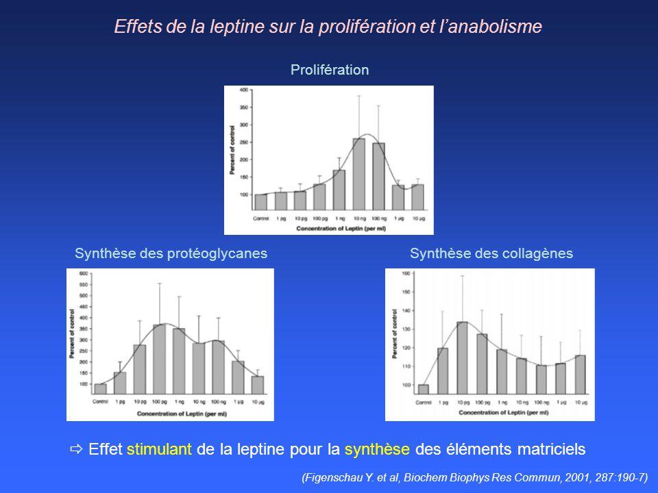 Effets de la leptine sur la prolifération et lanabolisme Synthèse des collagènesSynthèse des protéoglycanes Prolifération Effet stimulant de la leptin